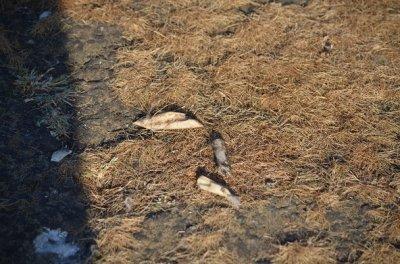 画像2: カパーラの御数珠(チベタンKapala MALA )